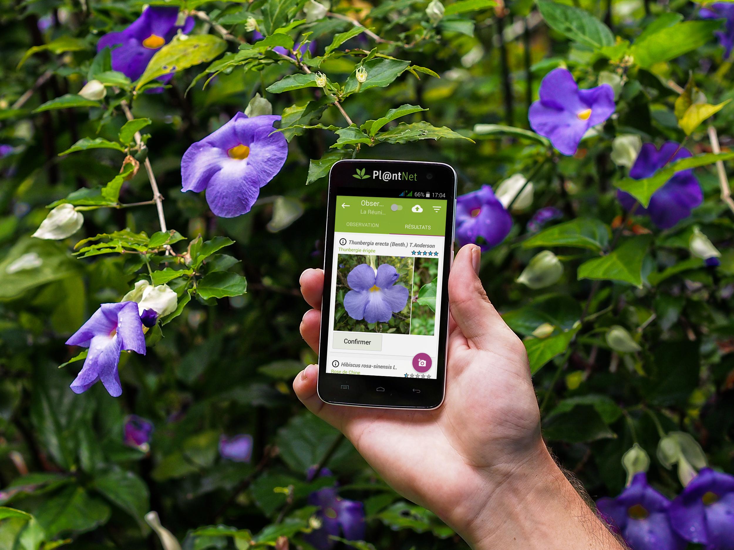 100 Génial Idées Rechercher Plante D Après Photo